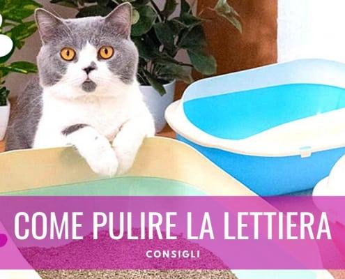 come gestire la lettiera del gatto