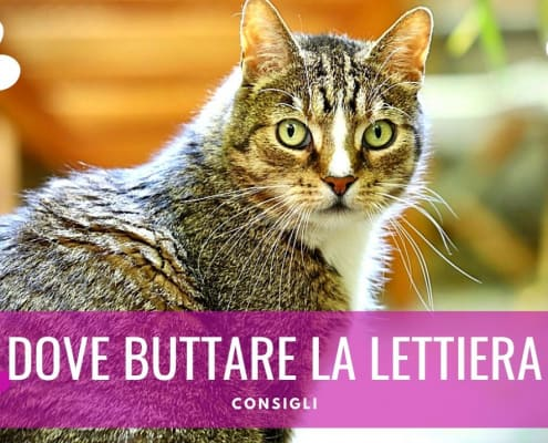 dove si butta la lettiera del gatto