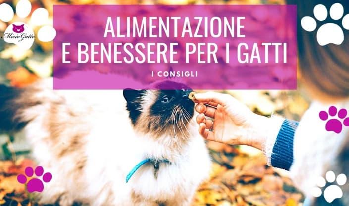 Alimentazione e benessere per i gatti