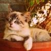Alla scoperta delle fasi di crescita del gatto