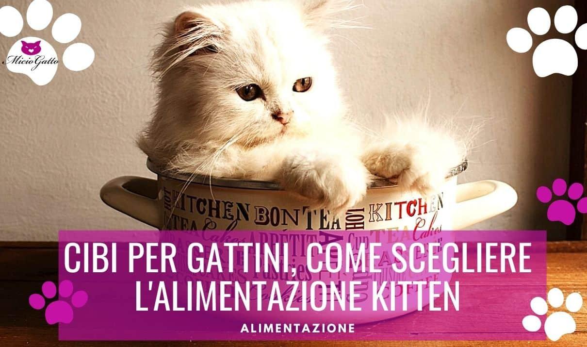 Cibi per gattini come scegliere l'alimentazione Kitten