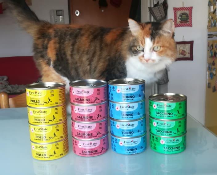 cibo gatti umido firstmate