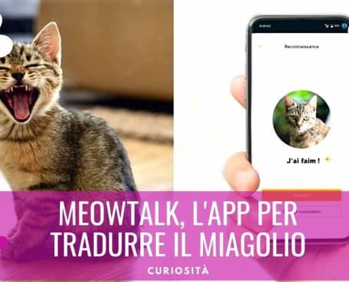 meowtalk app traduzione miagolio gatto