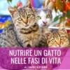 nutrire un gatto nelle fasi di vita
