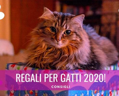 regali per gatti 2020