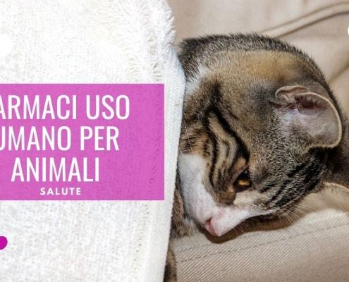 farmaci uso umano ad animali novità emendamento