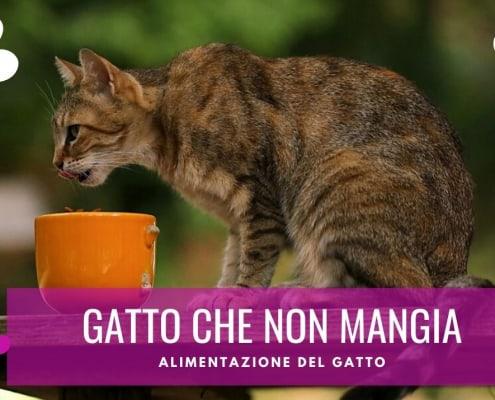 gattino che non mangia trucchi soluzioni motivi