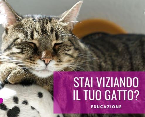 gatto viziato consigli viziare il gatto