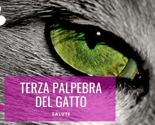 terza palpebra gatto quando preoccuparsi visibile infiammata