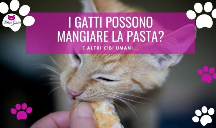 cosa possono mangaire i gatti pasta riso frutta formaggio