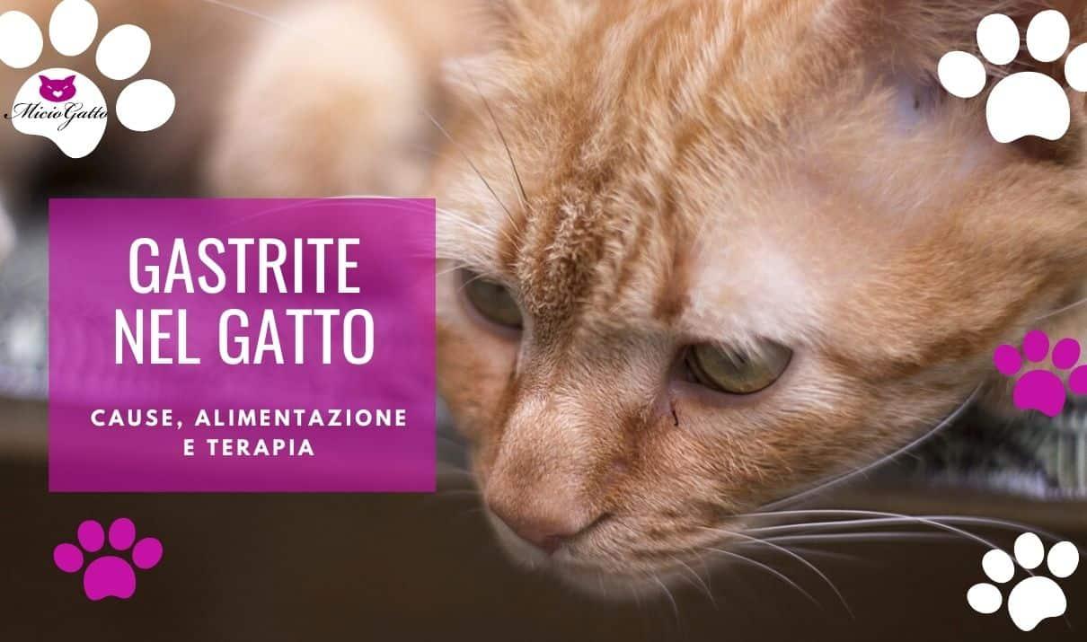 gastrite gatto cause digiuno alimentazione terapia cura
