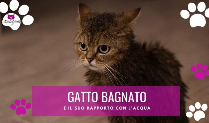 gatto bagnato gattino bagnato asciugarlo odia acqua