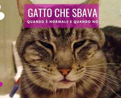 gatto che sbava ipersalivazione scialorrea gatto