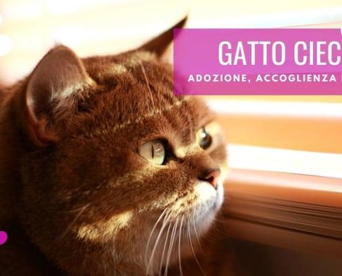 gatto cieco cause trauma adozione