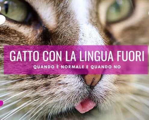 gatto lingua fuori