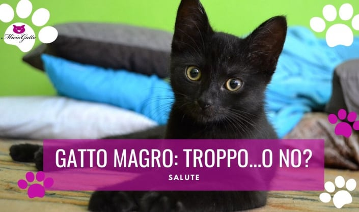 gatto magro gatto magrissimo