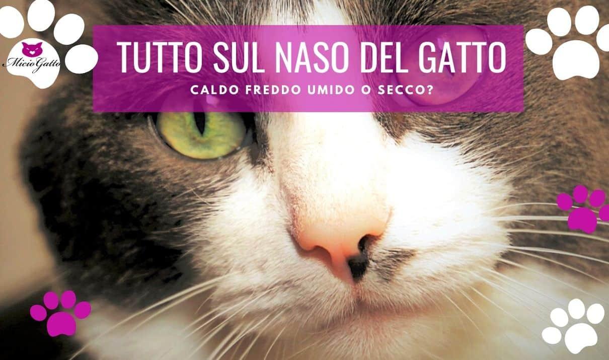 naso gatto secco umido freddo caldo crosticine