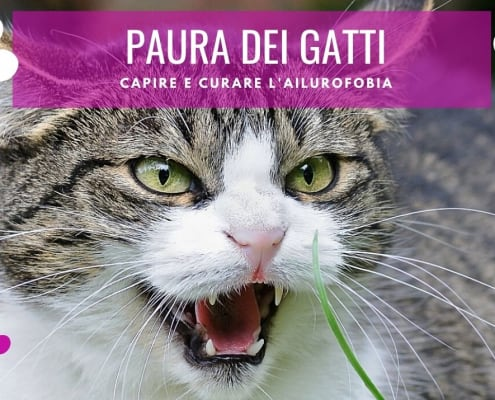 paura dei gatti ailurofobia fobia dei gatti