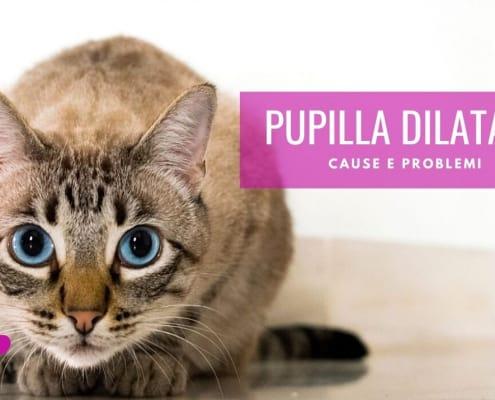 pupille dilatate gatto cause problemi