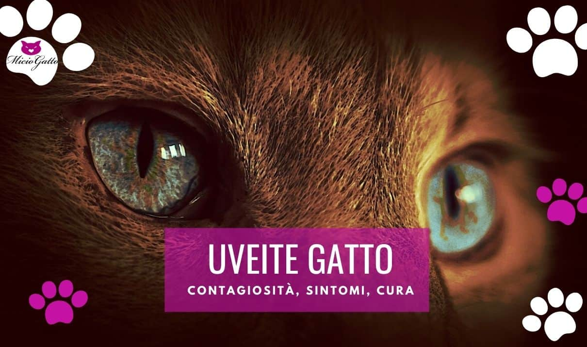 uveite gatto contagiosa sintomi cura terapia