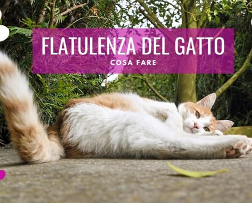 flatulenza gatto scoreggione puzzette