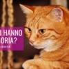 gatti hanno memoria riconoscono i padroni memoria gatti