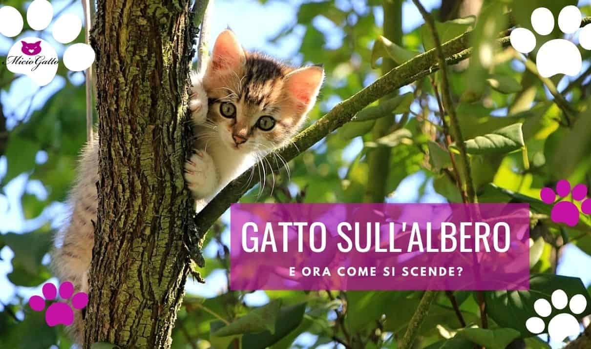 gatti sull albero come scendere pompieri gatto