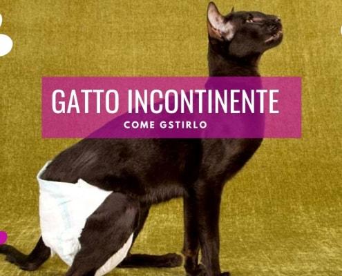gatto incontinente feci pannolino come gestire