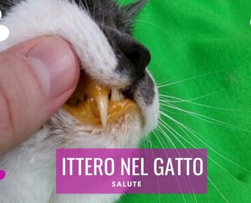ittero gatto cause alimentazione contagio