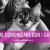 come comunicare con i gatti parlare al gatto