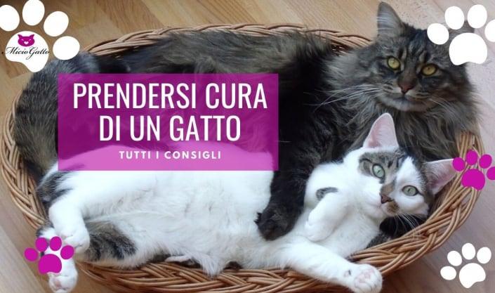 come prendersi cura di un gatto