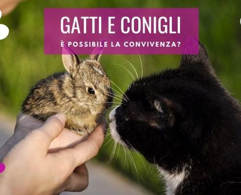 gatti e conigli convivenza attaccano presentazione