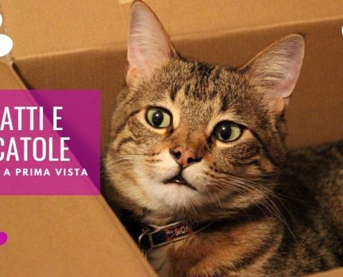 gatti e scatole perché ai gatti piacciono le scatole