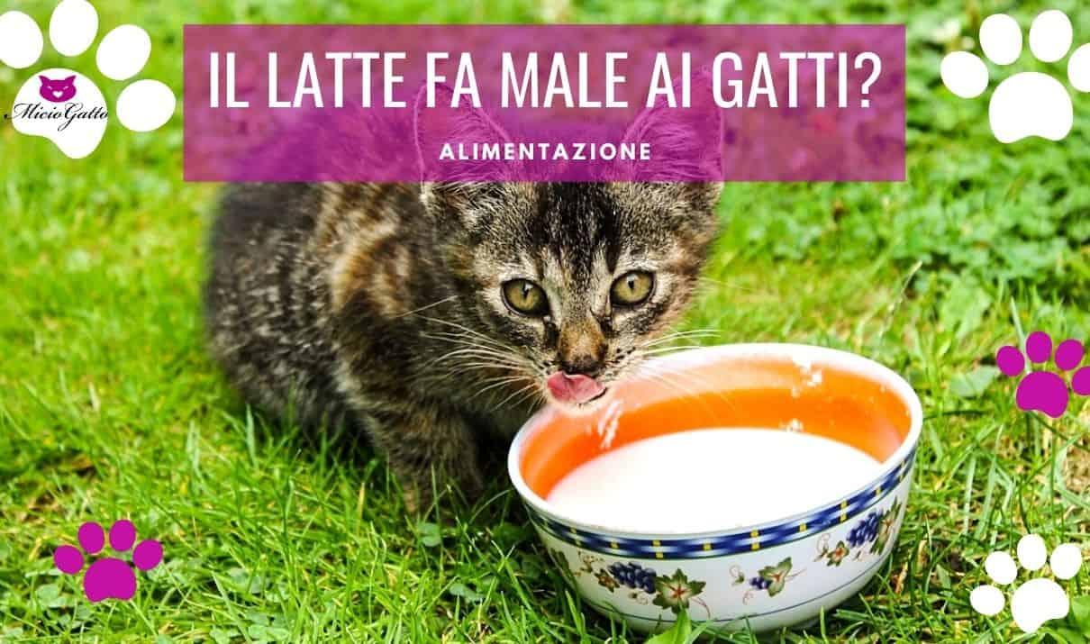 il latte fa male ai gatti senza lattosio gattini