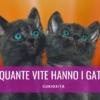 quante vite hanno i gatti 9 7
