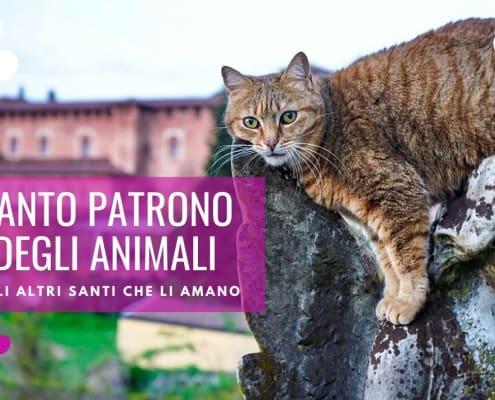 santo patrono degli animali domestici antonio abate francesco assisi