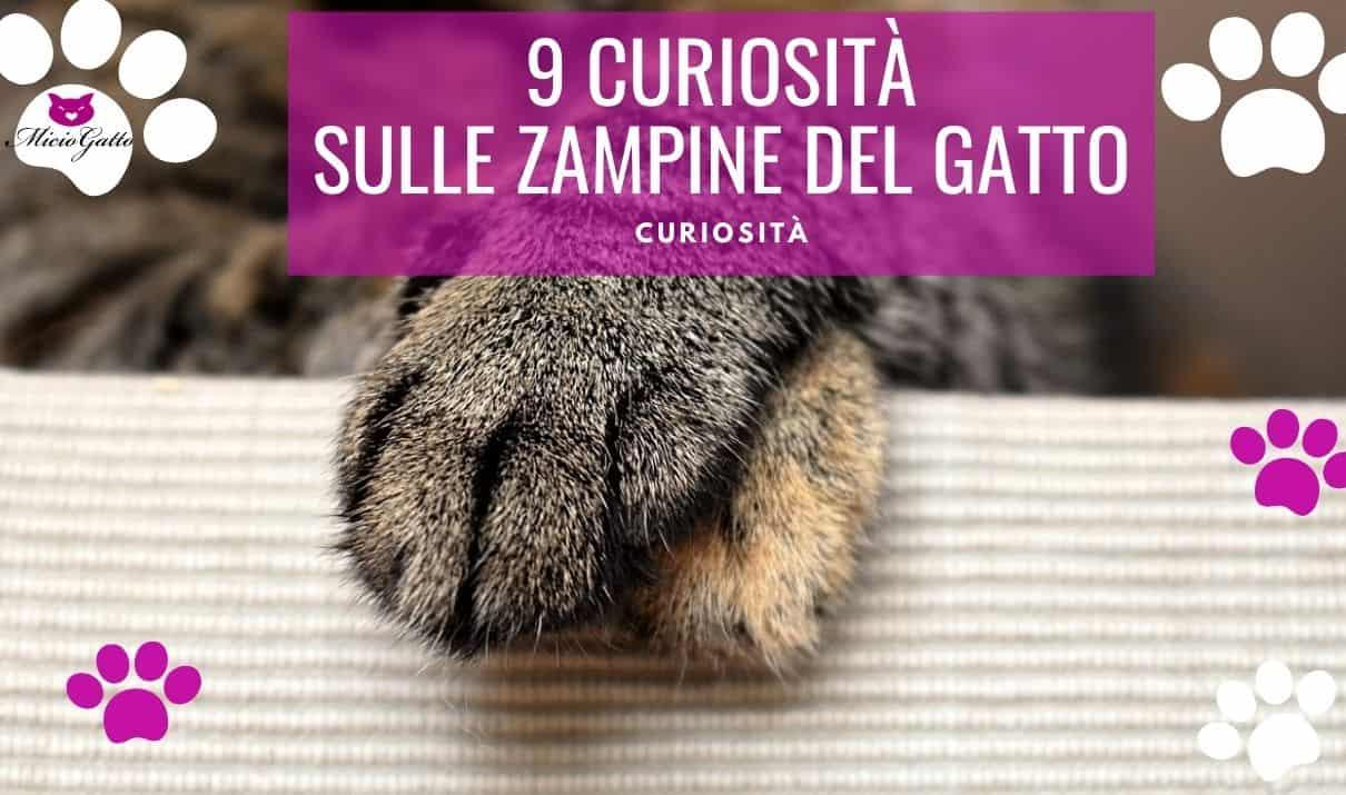 zampine gatto curiosità
