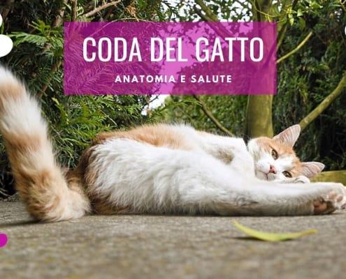 coda gatto anatomia rotta curiosita senza coda