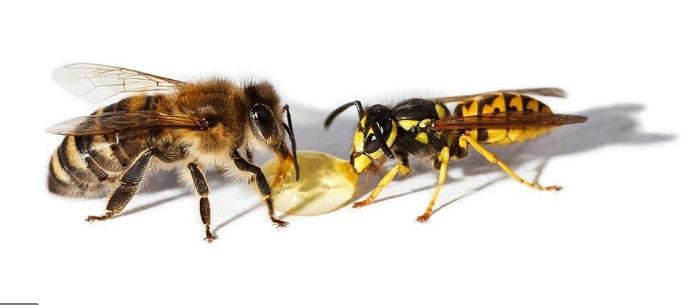 Differenze tra ape e vespa
