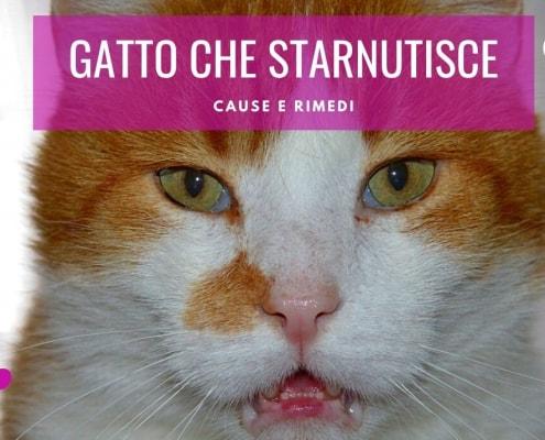 gatto che starnutisce continuamente rimedi