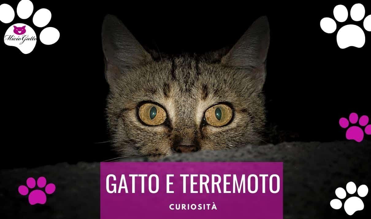 gatto terremoto gatti prevedono terremoti