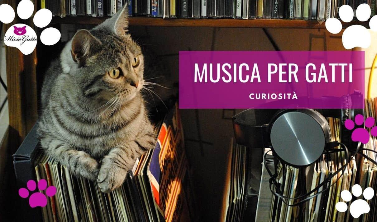 musica per gatti rilassante gatti stressati