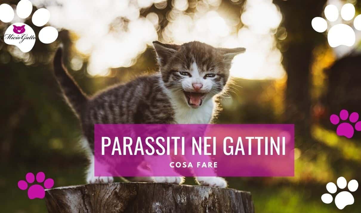 parassiti gattini come curarli quali sono cosa fare