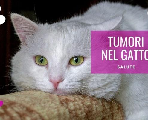 tumore gatto cancro gatti aspettative di vita sarcoma