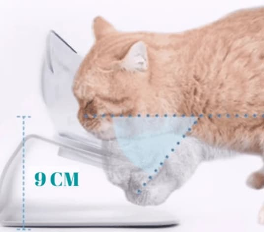 ciotola rialzata per gatti vantaggi