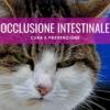 blocco intestinale gatto occlusione gastrointestinale cura prevenzione terapia sintomi