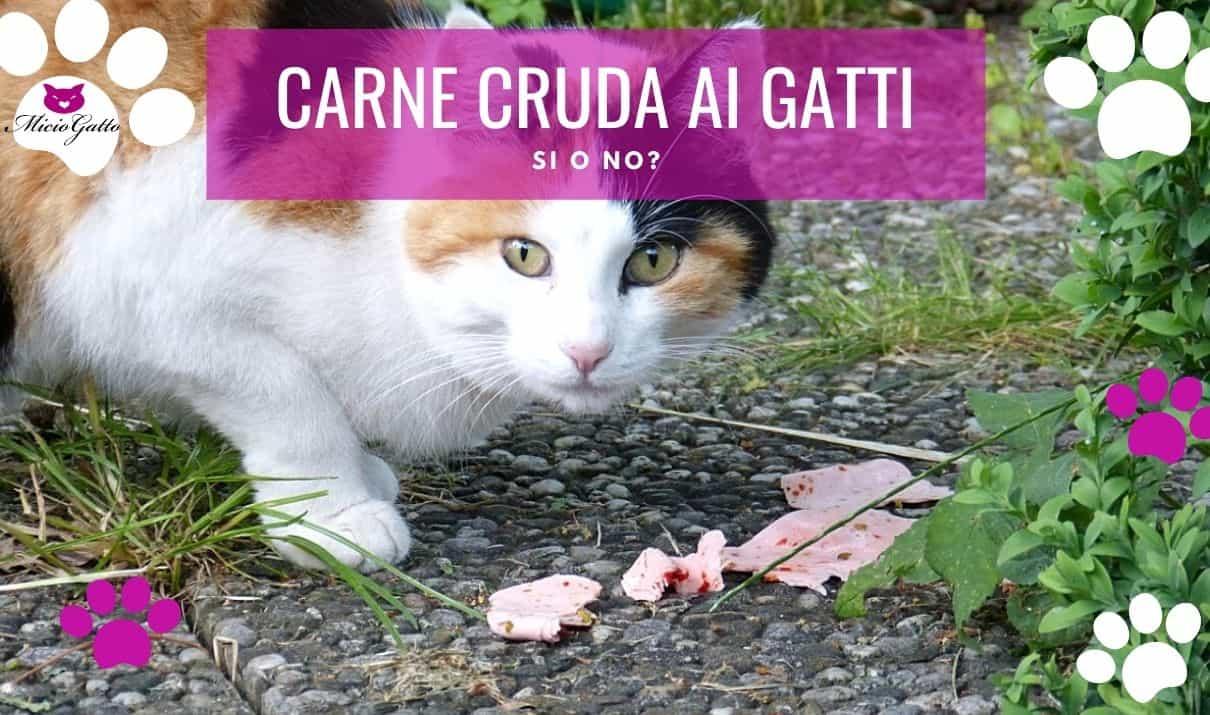 carne cruda ai gatti fa male consigli