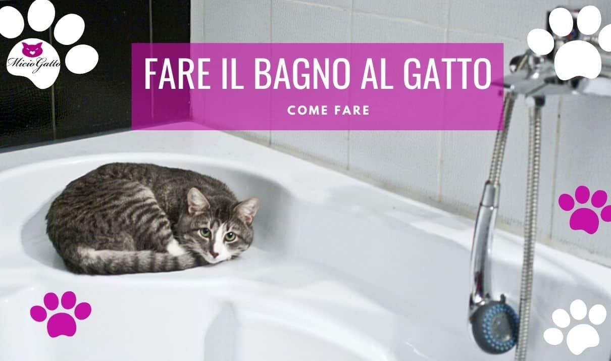 come fare il bagno al gatto