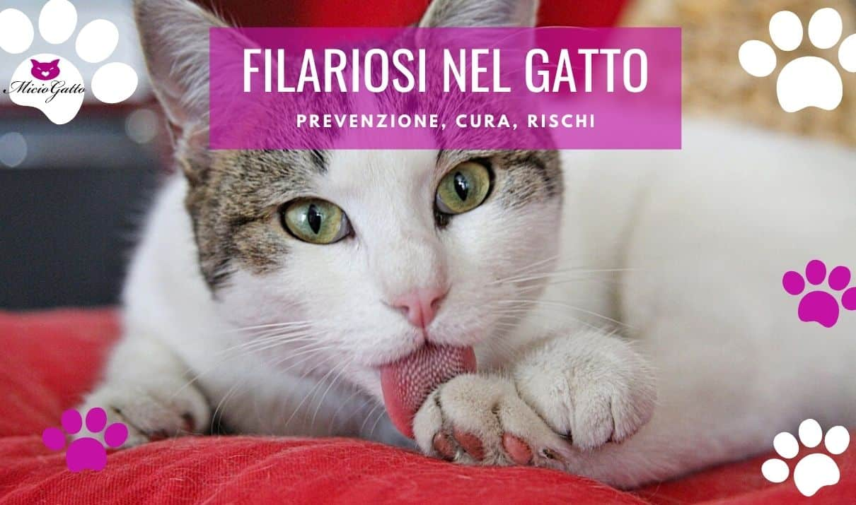 filaria gatto sintomi cura prevenzione