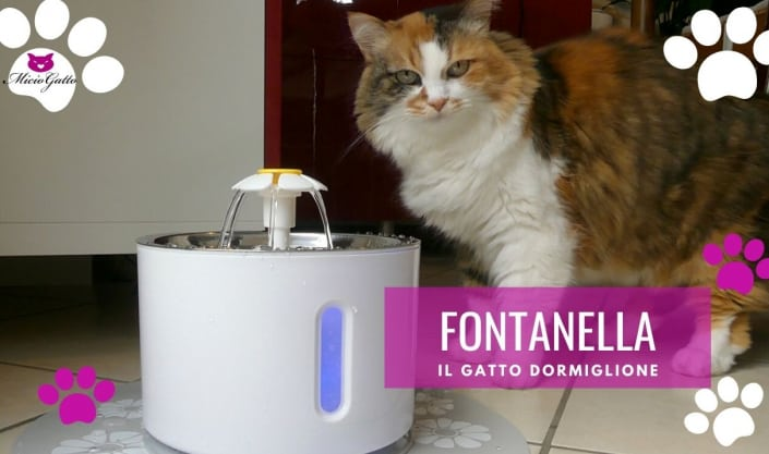 fontana per gatti il gatto dormiglione recensione